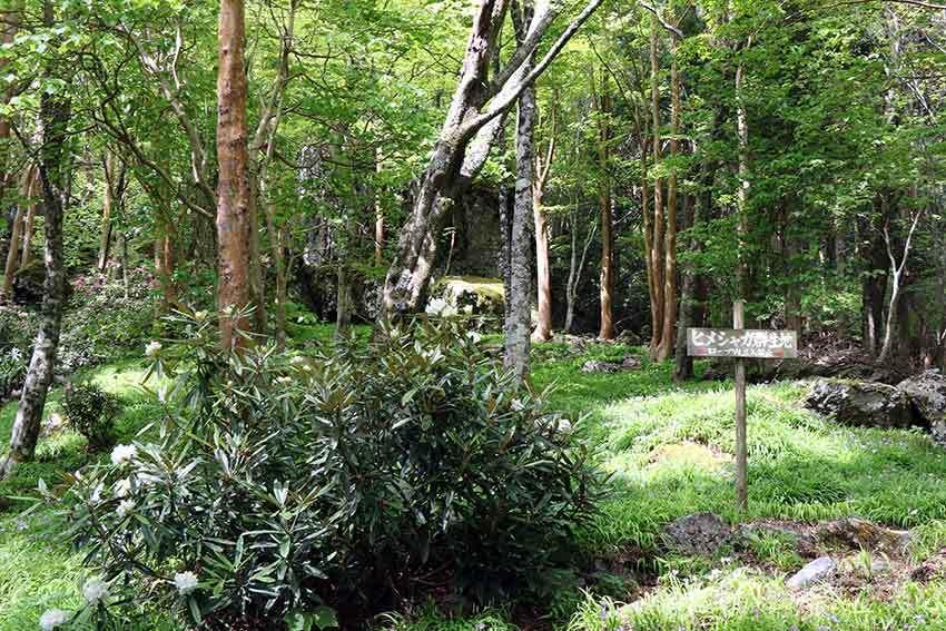 2021年 四国山岳植物園「岳人の森」-01♪_d0058941_20002356.jpg