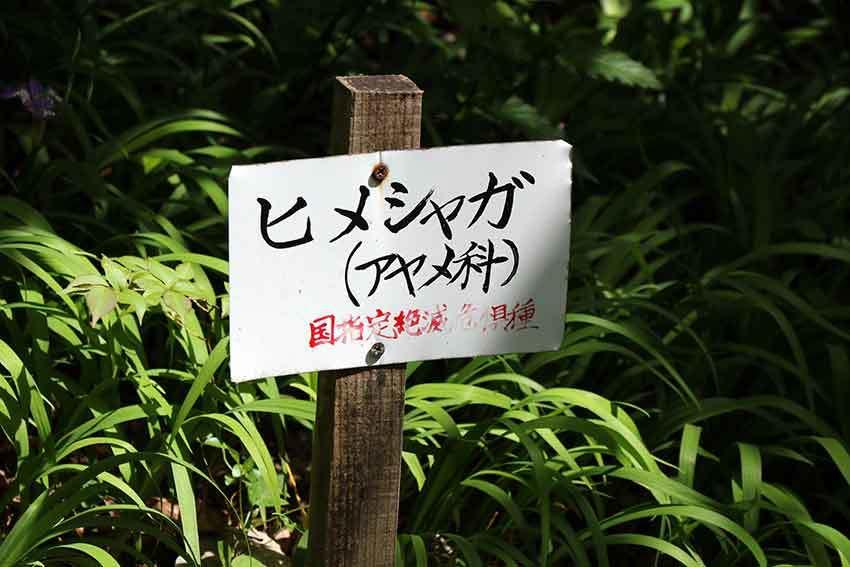 2021年 四国山岳植物園「岳人の森」-01♪_d0058941_20031695.jpg