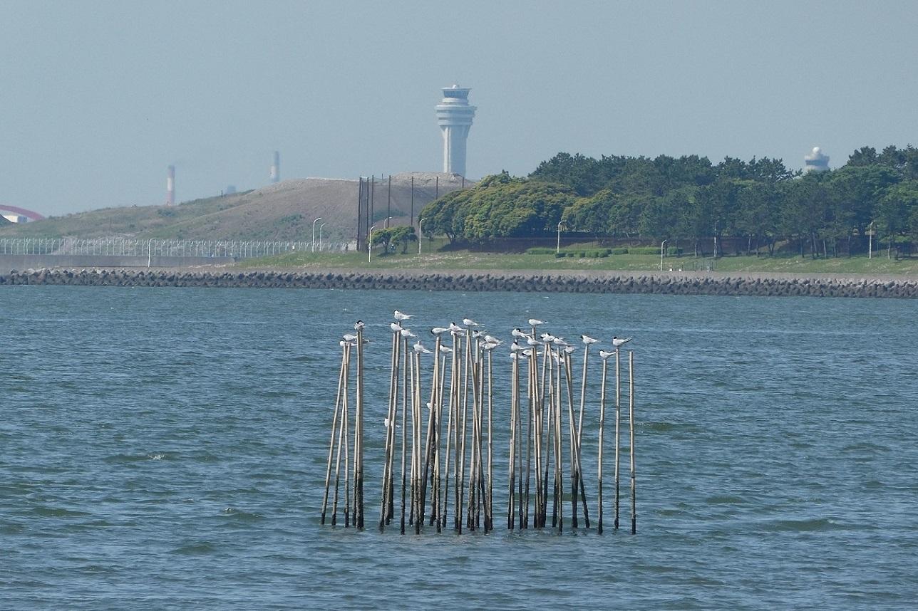 バードウォッチング・ツアー@葛西臨海・海浜公園 その1_d0288144_12580196.jpg