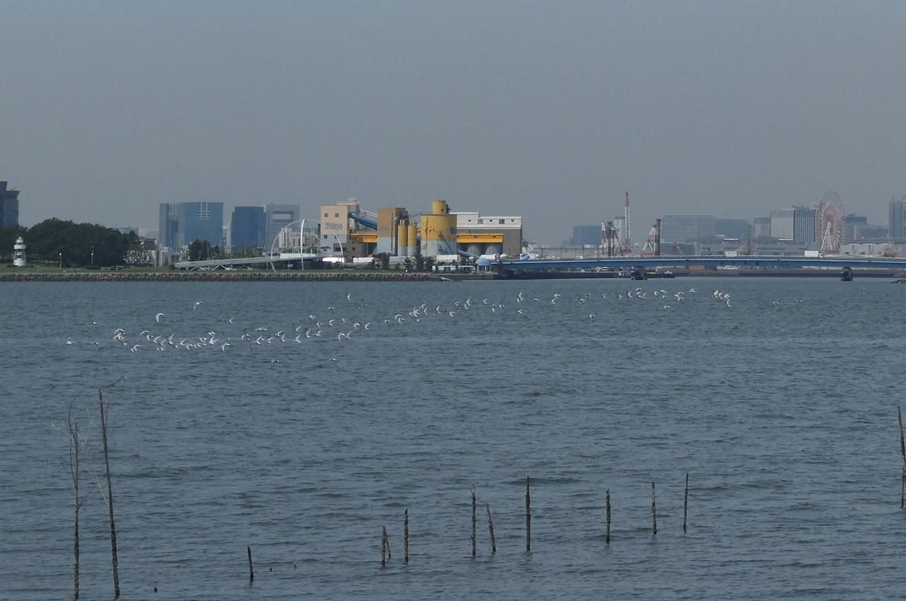 バードウォッチング・ツアー@葛西臨海・海浜公園 その1_d0288144_12591654.jpg