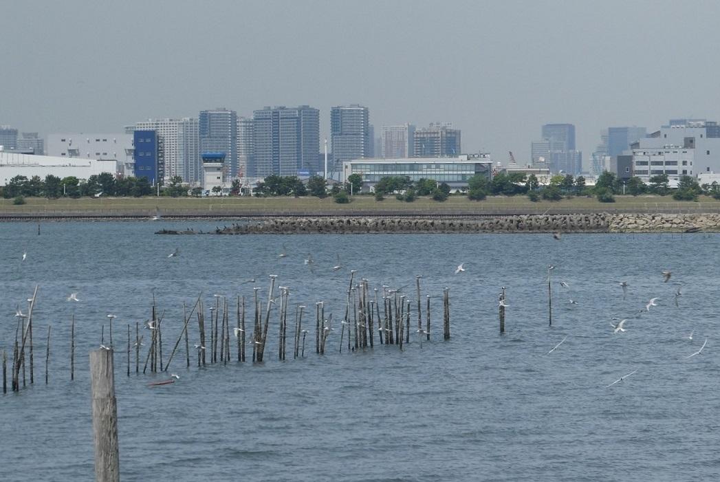 バードウォッチング・ツアー@葛西臨海・海浜公園 その1_d0288144_12592059.jpg