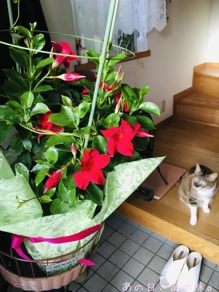 【ふたり弁】筍御飯とはんばぐ弁。母の日の、赤い花。_a0305046_09062538.jpg