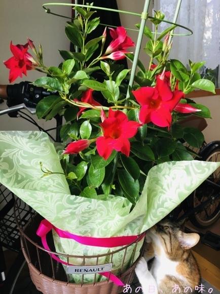【ふたり弁】筍御飯とはんばぐ弁。母の日の、赤い花。_a0305046_09063693.jpg