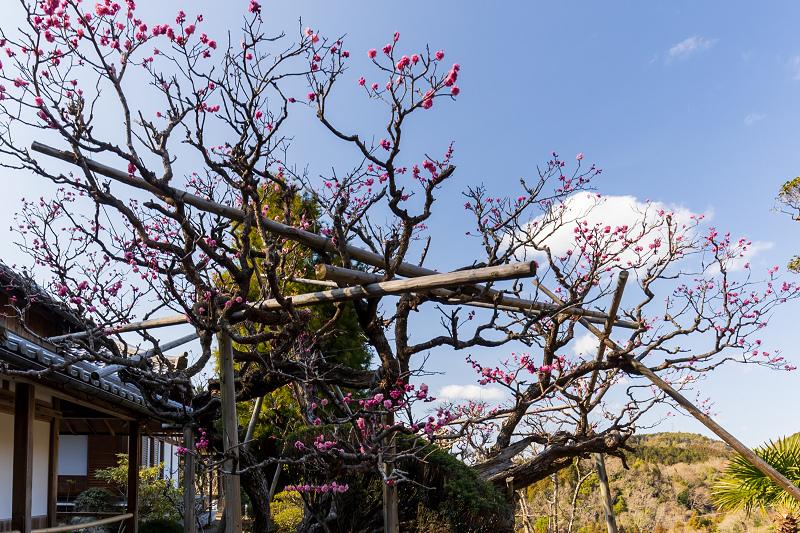 孤高の白梅と遍照院の春(宇治田原町)_f0155048_21284743.jpg