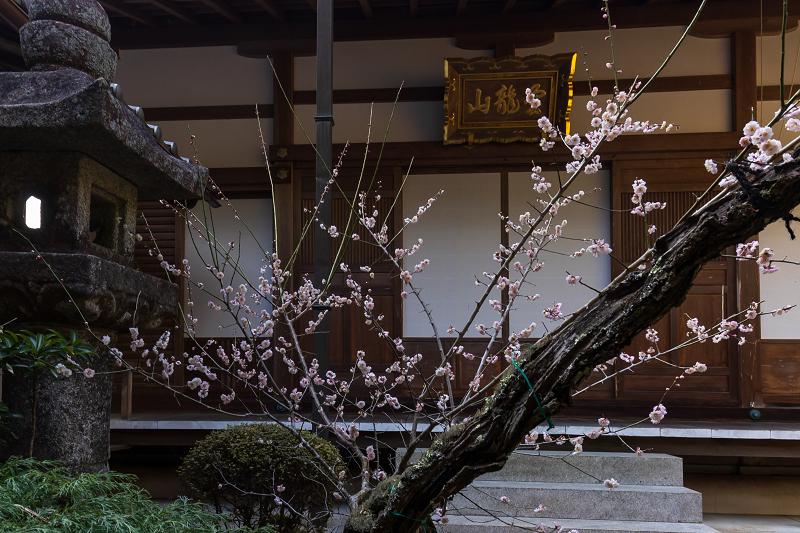 孤高の白梅と遍照院の春(宇治田原町)_f0155048_21290050.jpg