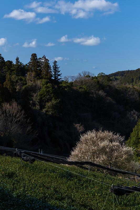 孤高の白梅と遍照院の春(宇治田原町)_f0155048_21325983.jpg