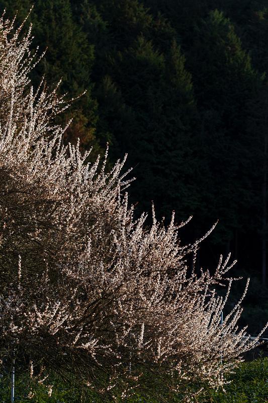 孤高の白梅と遍照院の春(宇治田原町)_f0155048_21333648.jpg