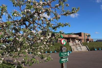りんご花まつり_2021.05.08~09撮影_d0131668_18260684.jpg