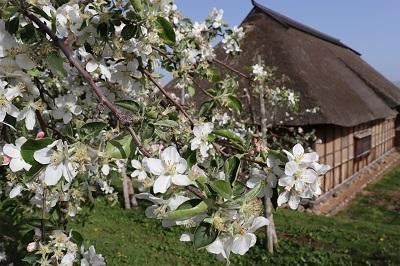 りんご花まつり_2021.05.08~09撮影_d0131668_18265547.jpg