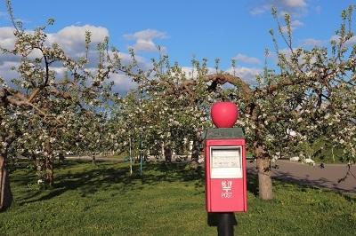 りんご花まつり_2021.05.08~09撮影_d0131668_18272335.jpg
