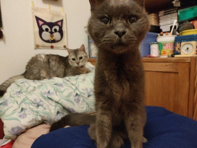猫には、猫の世界がある。_b0051172_15455175.jpg