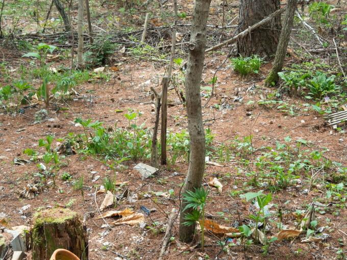 新緑の5月、エゾリス君のガーデンの草花も芽吹き始めました。_f0276498_20180411.jpg