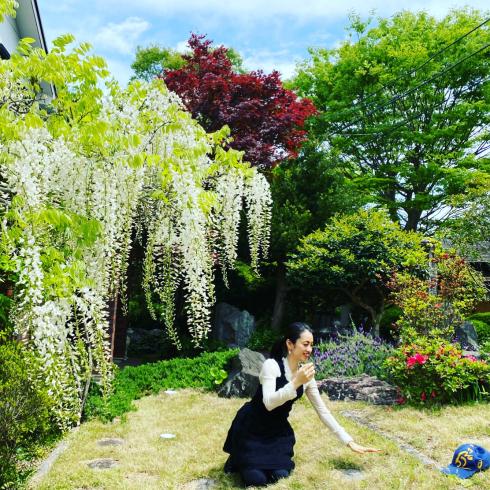 庭の藤_c0113713_22472665.jpg