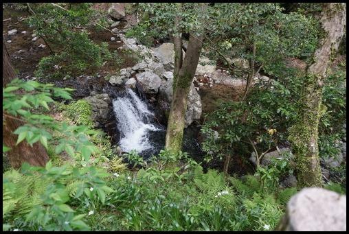 ウォーキング「箕面の滝」_d0024438_20234136.jpg