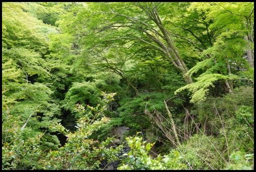 ウォーキング「箕面の滝」_d0024438_20241271.jpg