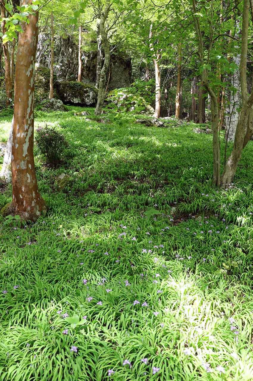 2021年 四国山岳植物園「岳人の森」-02♪_d0058941_20470859.jpg