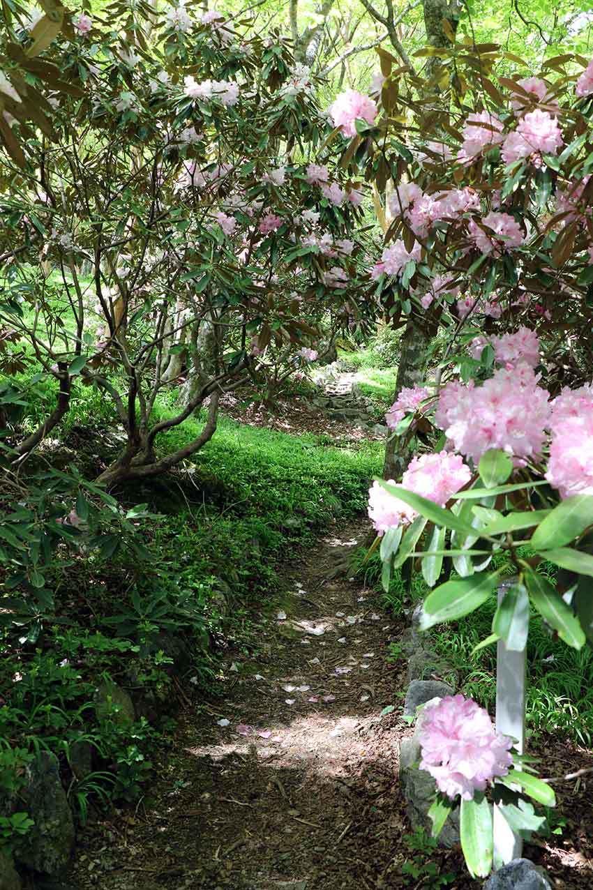 2021年 四国山岳植物園「岳人の森」-02♪_d0058941_20483144.jpg