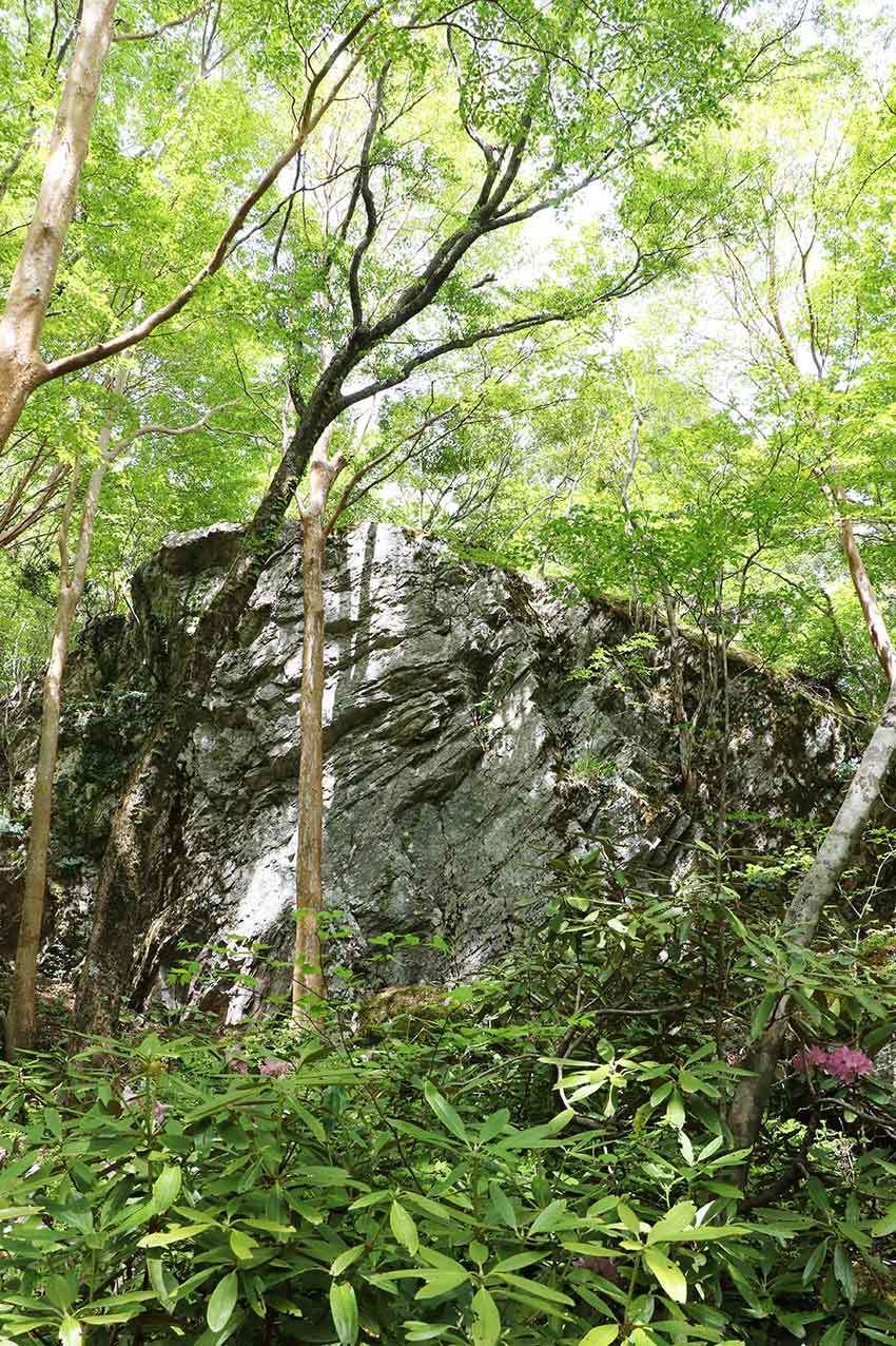 2021年 四国山岳植物園「岳人の森」-02♪_d0058941_20515553.jpg