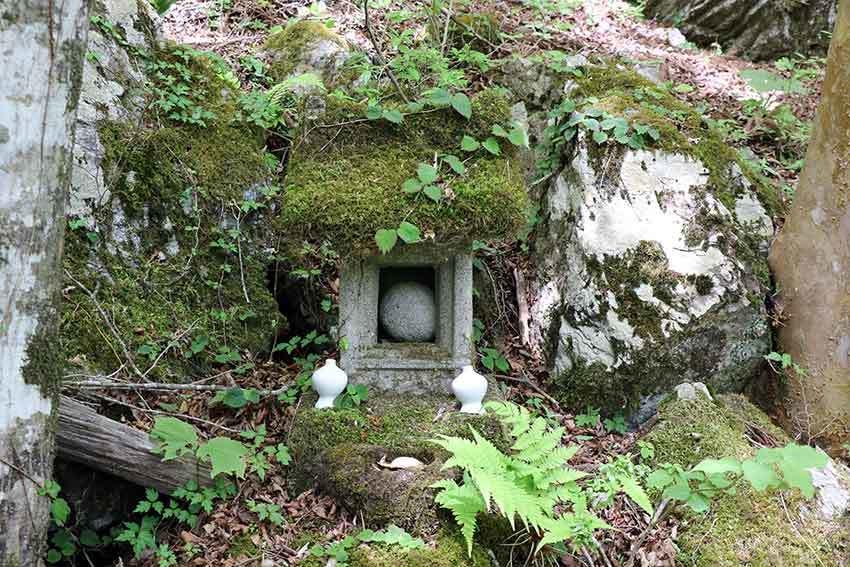 2021年 四国山岳植物園「岳人の森」-02♪_d0058941_20521062.jpg
