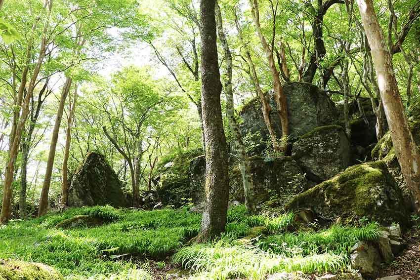 2021年 四国山岳植物園「岳人の森」-02♪_d0058941_20522258.jpg