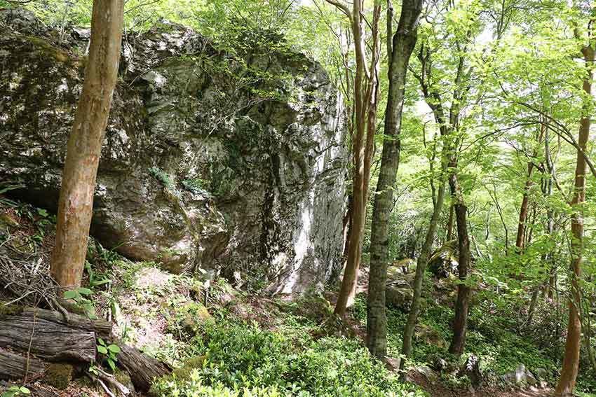 2021年 四国山岳植物園「岳人の森」-02♪_d0058941_20534116.jpg