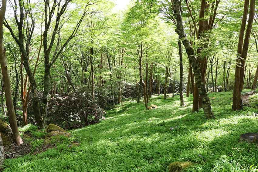 2021年 四国山岳植物園「岳人の森」-02♪_d0058941_20545677.jpg