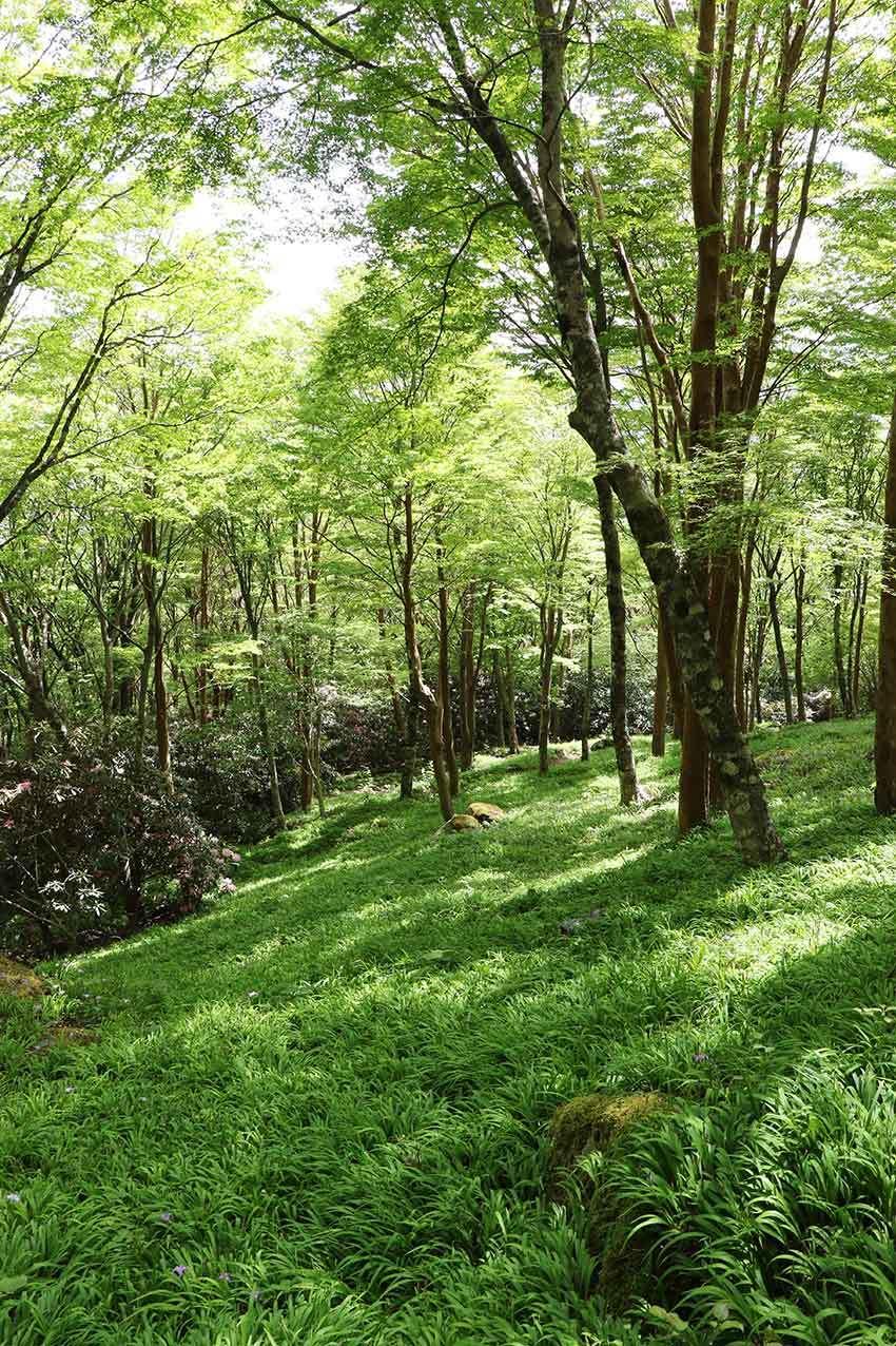 2021年 四国山岳植物園「岳人の森」-02♪_d0058941_20551300.jpg