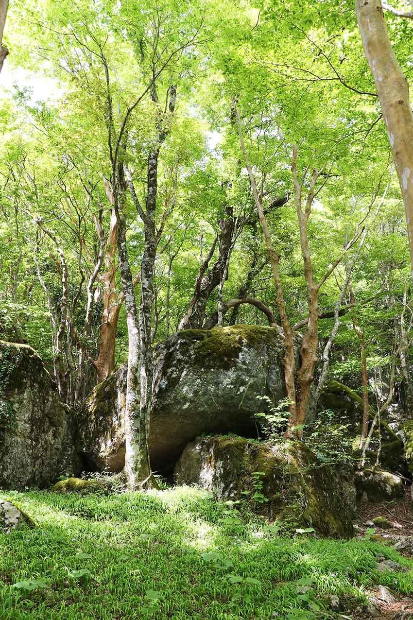 2021年 四国山岳植物園「岳人の森」-02♪_d0058941_20571487.jpg
