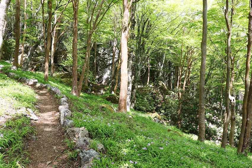 2021年 四国山岳植物園「岳人の森」-02♪_d0058941_20573466.jpg
