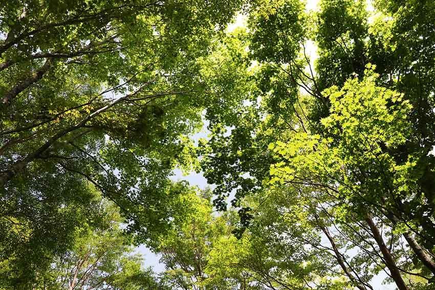 2021年 四国山岳植物園「岳人の森」-02♪_d0058941_20575193.jpg