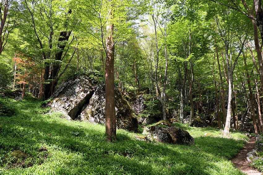 2021年 四国山岳植物園「岳人の森」-02♪_d0058941_20582763.jpg