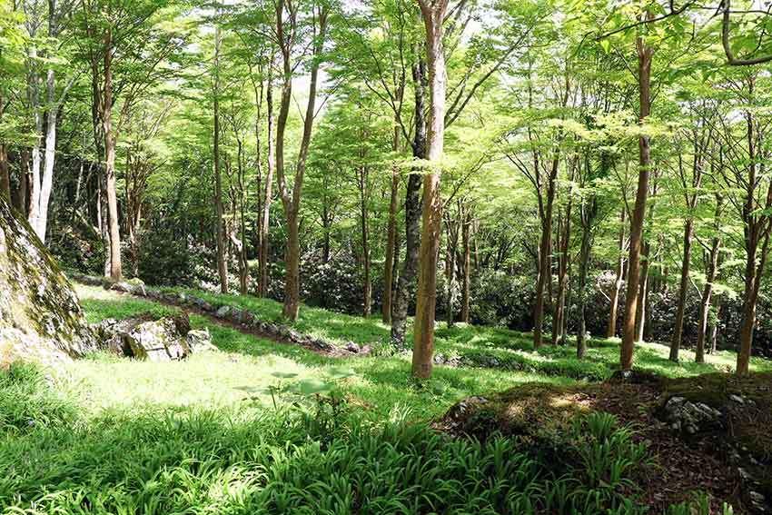 2021年 四国山岳植物園「岳人の森」-02♪_d0058941_20584646.jpg