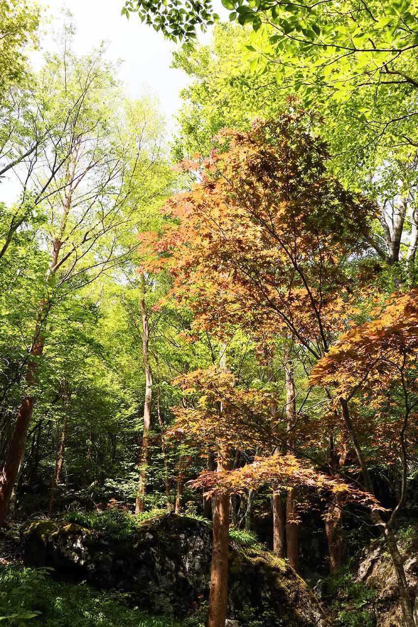 2021年 四国山岳植物園「岳人の森」-02♪_d0058941_20591419.jpg