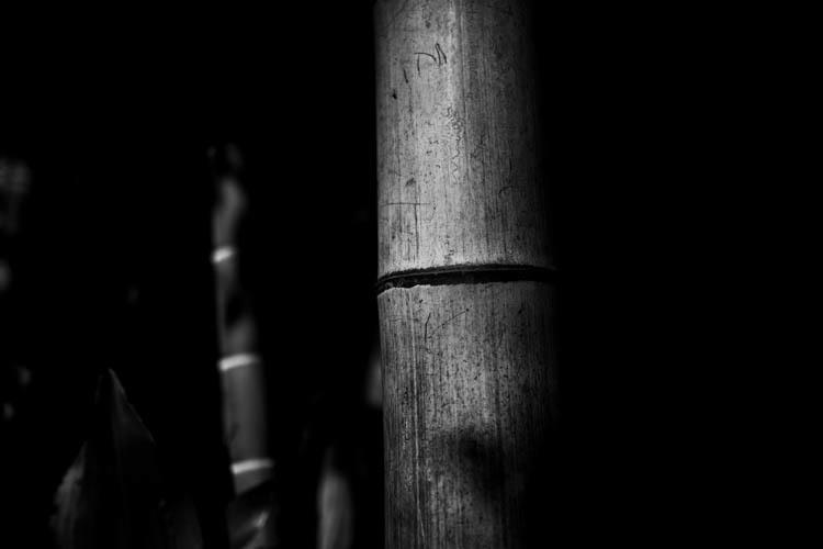 竹林の竹1本_a0247450_13480338.jpg