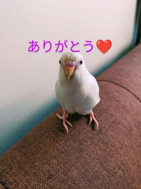 シロちゃん_c0162773_10122795.jpg