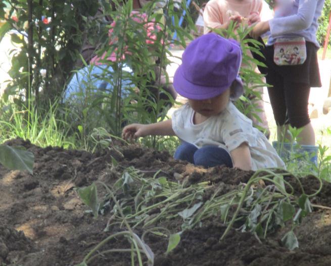 苗植えの季節_f0334882_15261834.jpeg