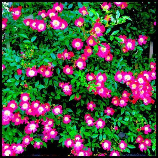 5月11日(火)花の名前について_c0026089_20214514.jpg