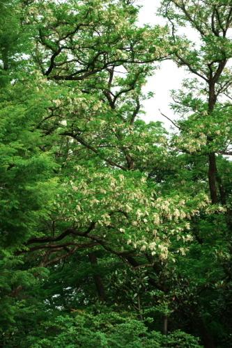 さいたま市 与野公園の薔薇園1_a0263109_16062066.jpg