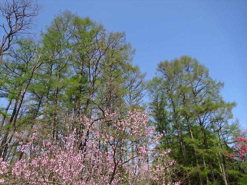 木々の芽吹き_f0105112_05203000.jpg