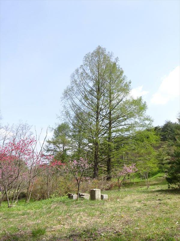 木々の芽吹き_f0105112_05203082.jpg