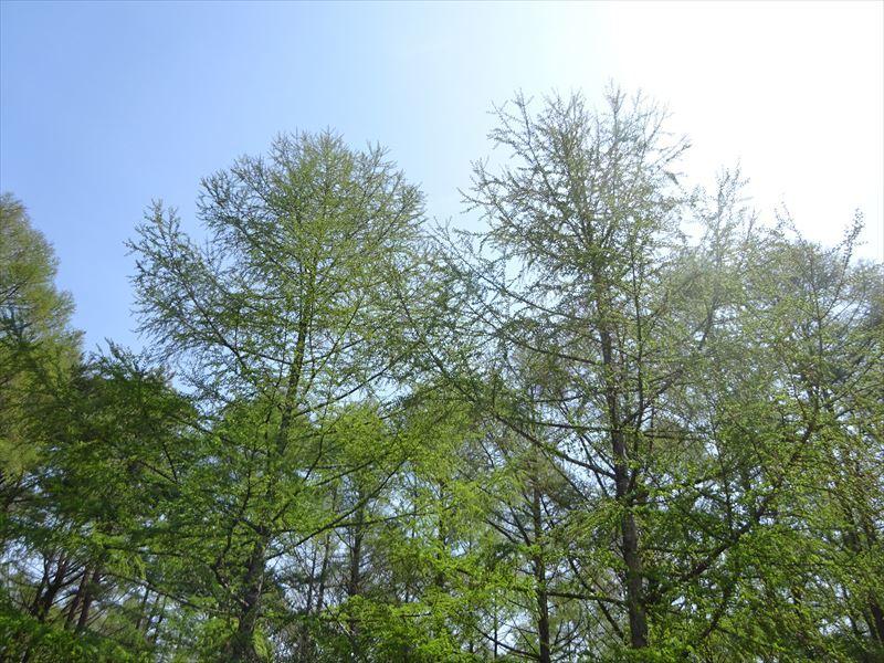 木々の芽吹き_f0105112_05203087.jpg