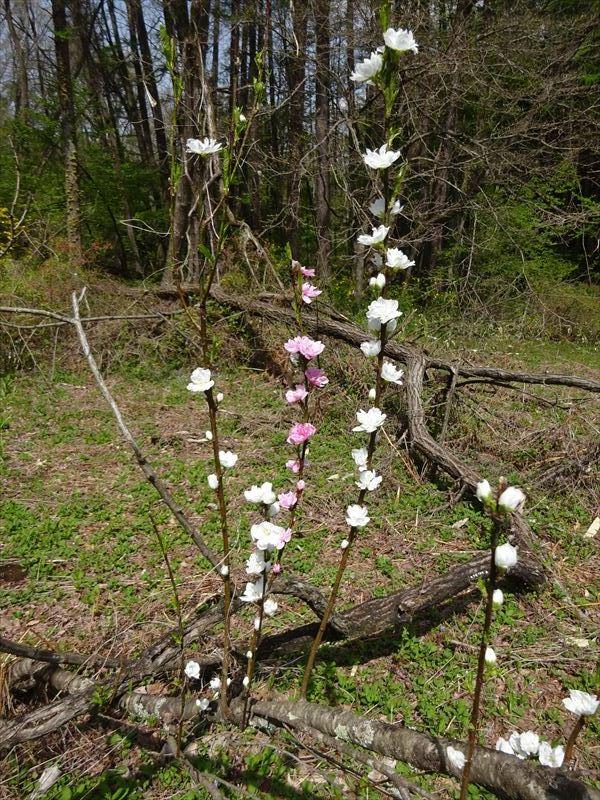 木々の芽吹き_f0105112_05273415.jpg
