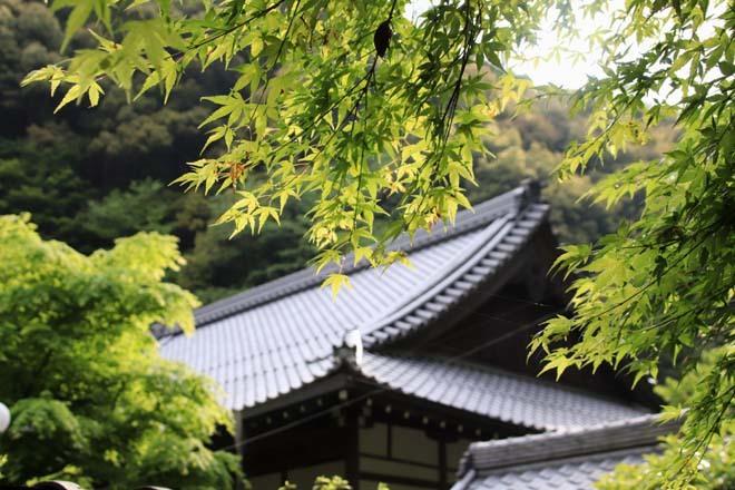 南禅寺 最勝院 青もみじ_e0048413_20563192.jpg