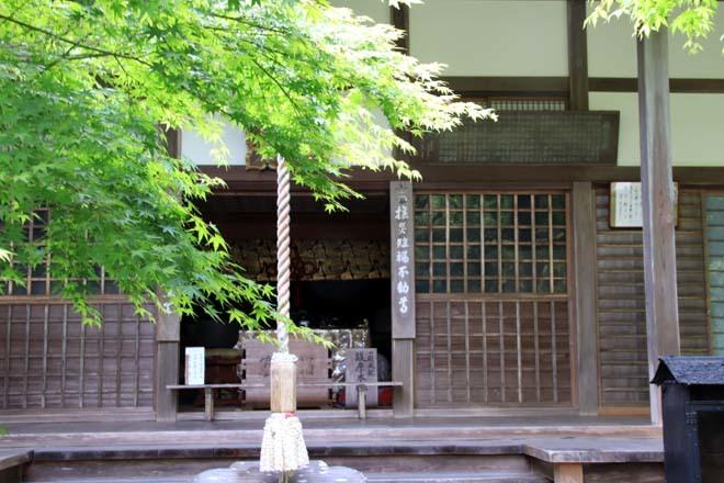南禅寺 最勝院 青もみじ_e0048413_20564676.jpg