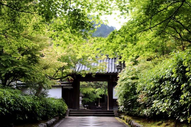 南禅寺 最勝院 青もみじ_e0048413_20565756.jpg