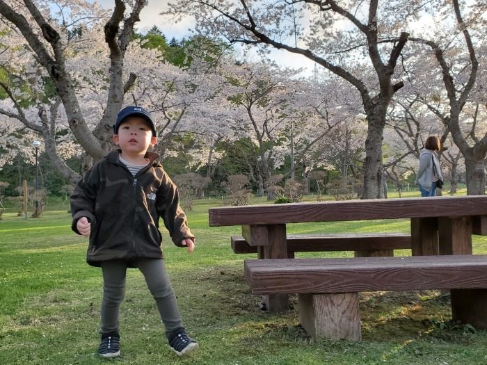 長万部公園の桜。絶好調。_d0164343_19215529.jpg