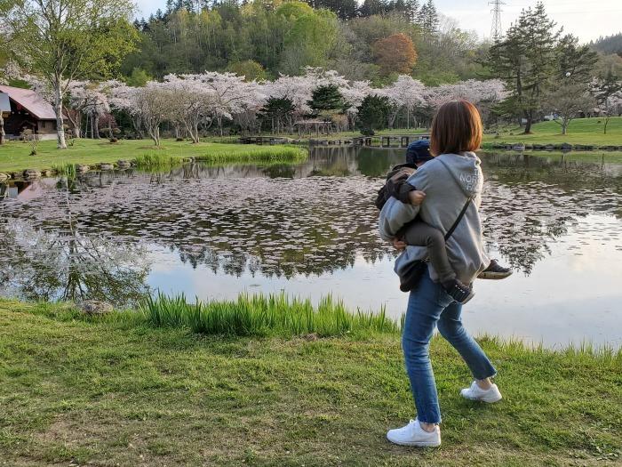 長万部公園の桜。絶好調。_d0164343_19223979.jpg