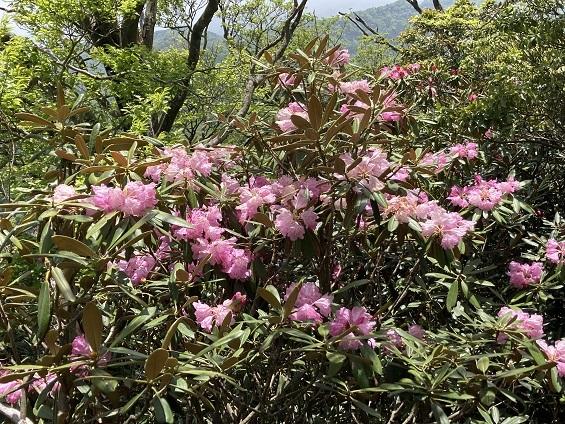 昨日のリベンジで英彦山へ_e0164643_16084286.jpg