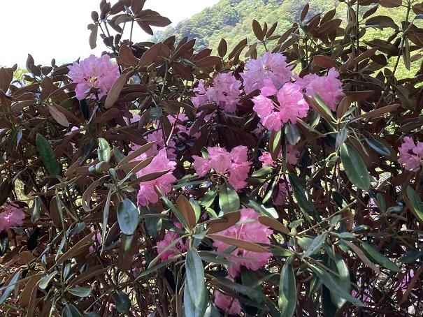 昨日のリベンジで英彦山へ_e0164643_16085159.jpg