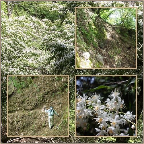昨日のリベンジで英彦山へ_e0164643_16085867.jpg